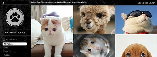CutestPaw动物萌照网